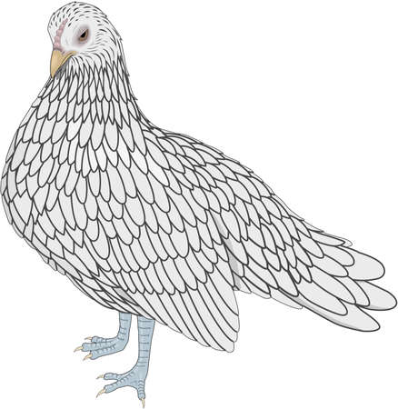 Bantam Hen Illustration Ilustração