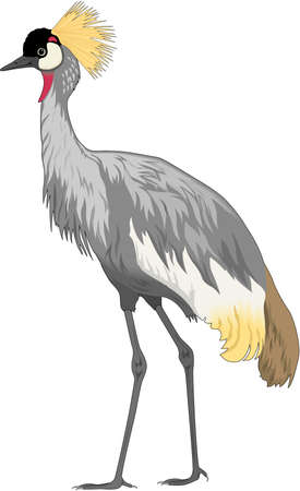 Crowned Crane Illustration