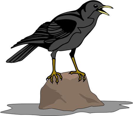 Crow Illustration