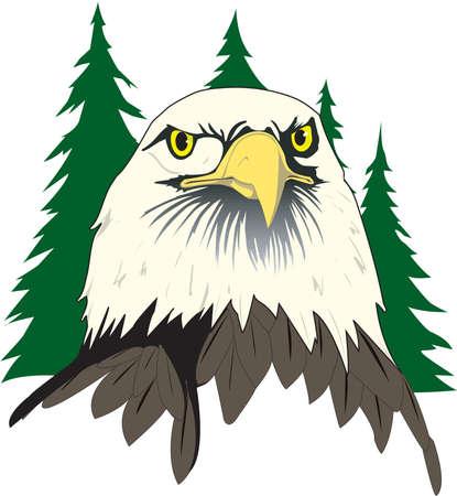 Bald Eagle Face Illustration Reklamní fotografie - 83873960
