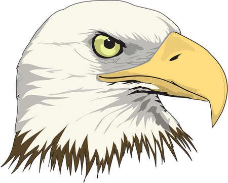 Bald Eagle hoofd illustratie Stock Illustratie