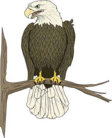 Eagle Perched Illustration