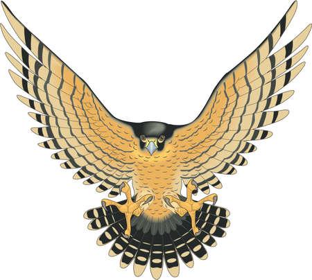 Illustrazione del Falcon di Peregrine