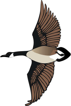 Canadian Goose Illustration Imagens - 83874026