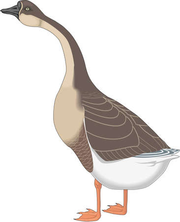 Chinese Goose Illustration