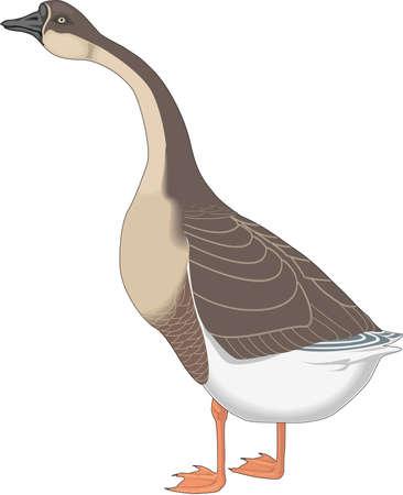 Chinese Goose Illustration