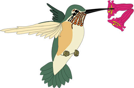 Hummingbird illustration.