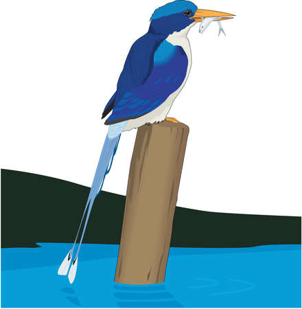Paradise Kingfisher illustration. Illustration
