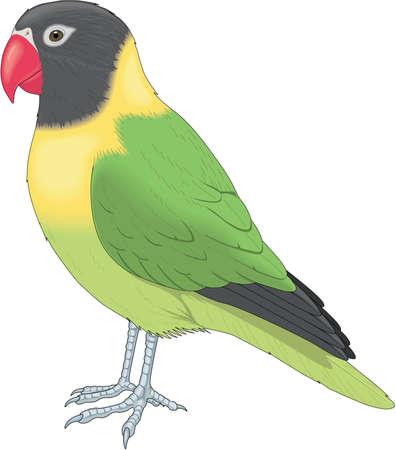 Love Bird Illustration Иллюстрация