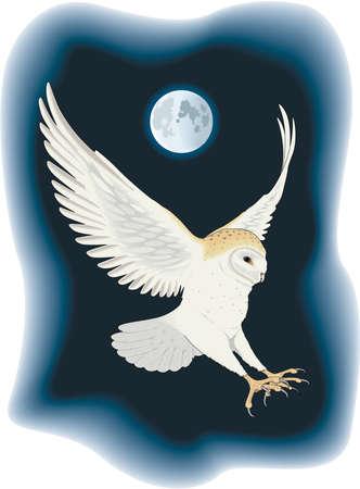 納屋フクロウの図
