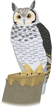 Great Horned Owl Illustration Illustration