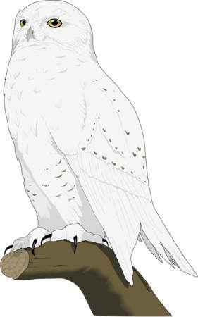 Sneeuw Uil Illustratie Stock Illustratie