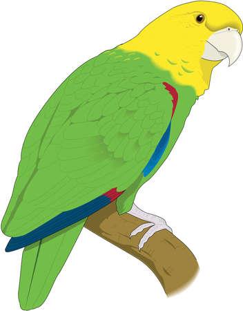 Parrot illustration. Ilustração