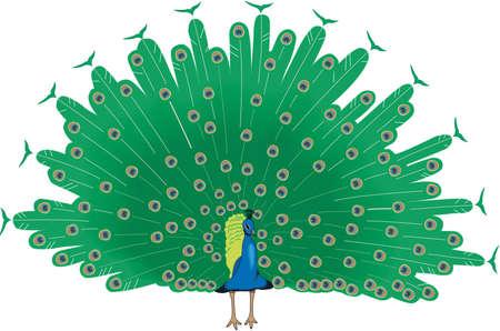 孔雀の図。  イラスト・ベクター素材