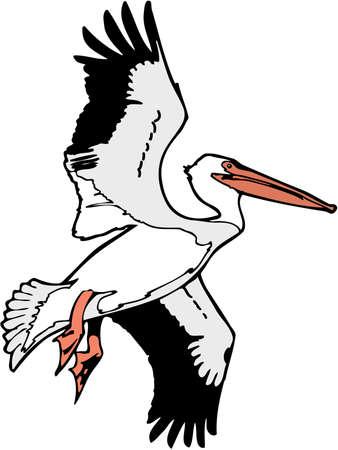 American white pelican illustration. Banco de Imagens - 83893516