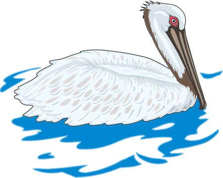 Bruine pelikaanillustratie.