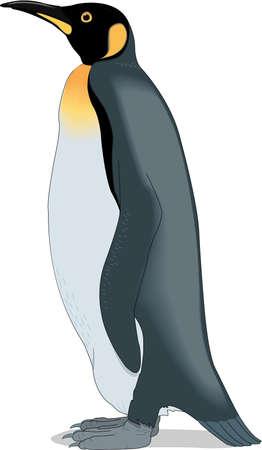 キング ペンギンのイラスト。