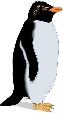イワトビ ペンギンのイラスト。  イラスト・ベクター素材