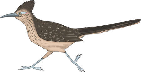 Road runner illustration.
