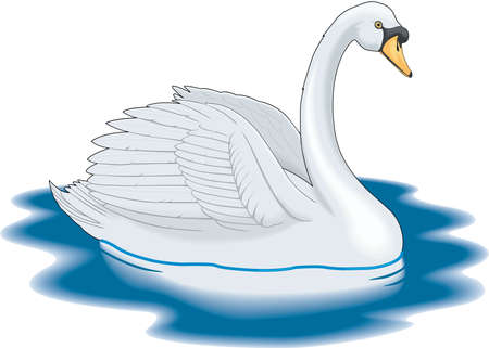 Mute Swan Illustratie Stock Illustratie