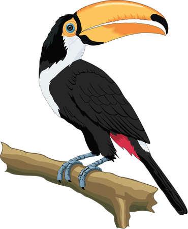 Toco Toucan Illustration