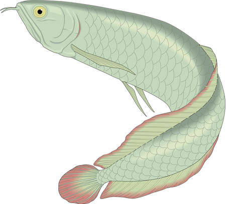 Arowana illustration. 版權商用圖片 - 83915941