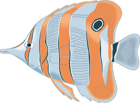 Longnose fish illustration.