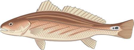 Ilustración de bajo de canal.