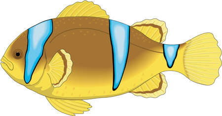 Clown fish illustration. Illustration
