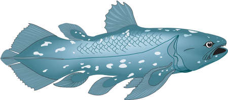 Coelacanth fish illustration. 版權商用圖片 - 83916350