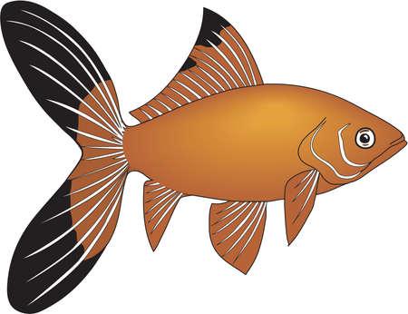 Goldfish illustration. 向量圖像