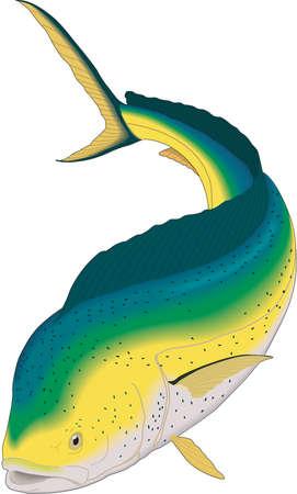 Colorful fish illustration.