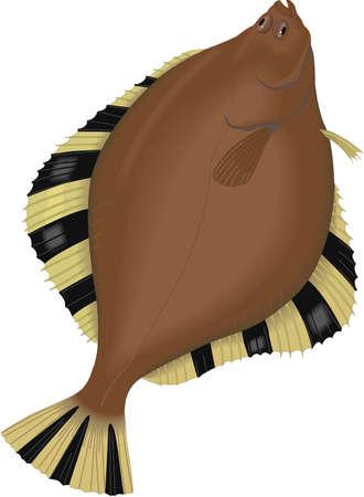 Starry flounder illustration.