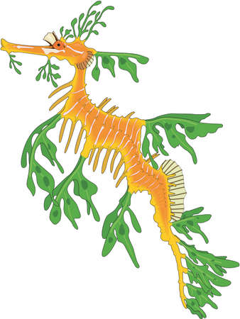 Leafy sea dragon illustration.