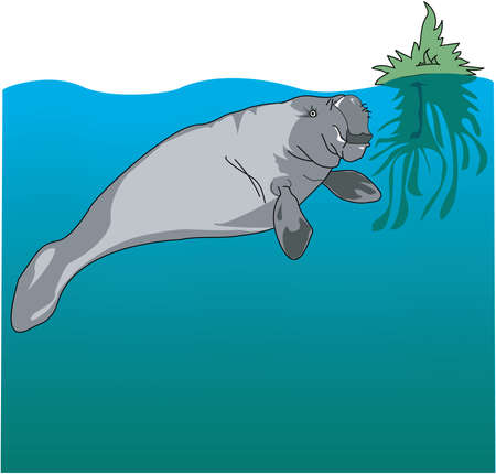 Manatee illustration.