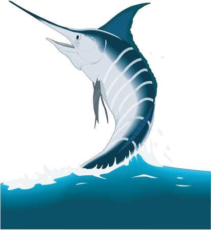 Marlin ilustración. Ilustración de vector