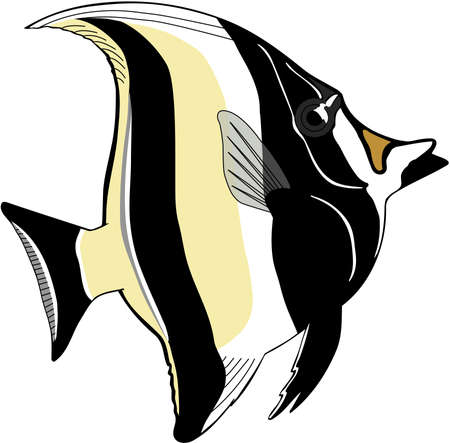 Moorish idol illustration. Çizim
