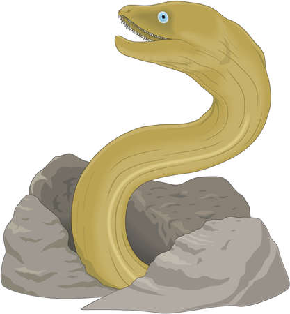 Moray eel illustration.