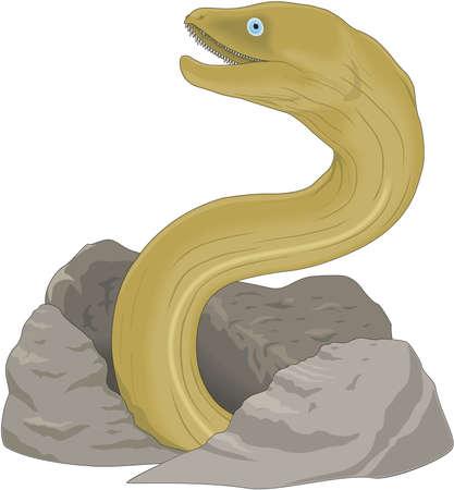Moray eel illustration. Reklamní fotografie - 83917407
