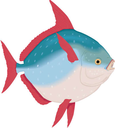 Opah Illustration