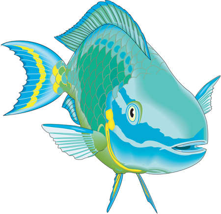 Stoplight Parrotfish Illustration