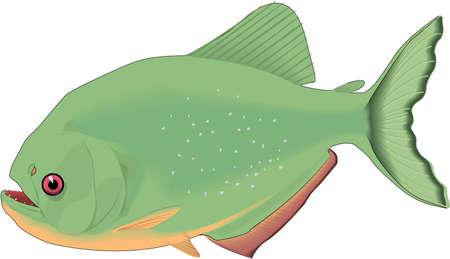 Piranha Illustration