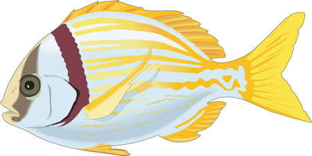 Porkfish Illustration 版權商用圖片 - 83943149