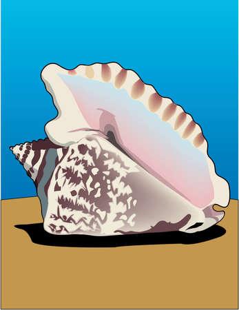 Hawk Winged Conch Illustration Illustration