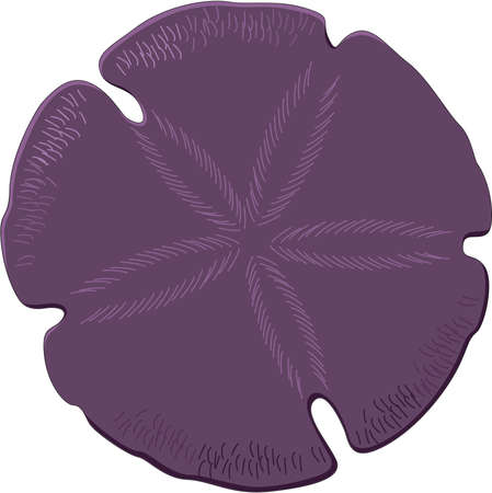 Sand Dollar Illustration