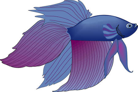 fighting fish: Siamese Fighting Fish Illustration