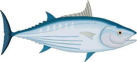 Skipjack Tuna Illustration 向量圖像