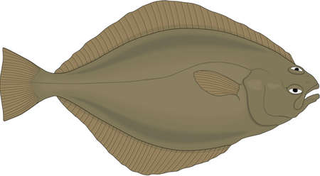Sole Illustration