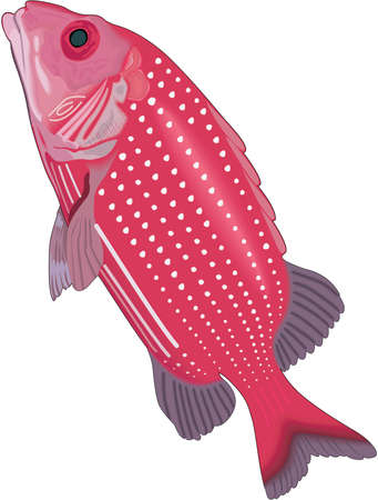 Deepwater Squirrelfish Illustration Ilustrace