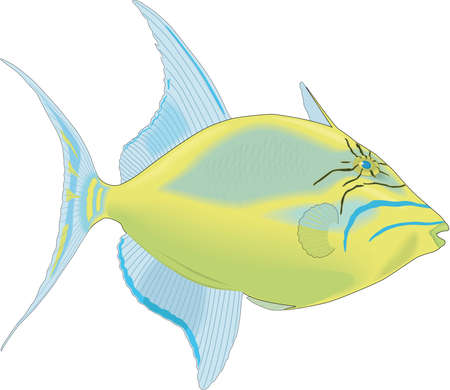 Queen Triggerfish Illustration